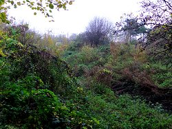 Lush vegetation near Osbaldwick Beck
