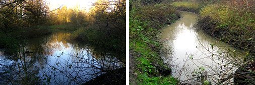 Tang Hall Beck: last week (left) and this week (right)