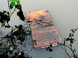 Water Vole raft, still in place in Tang Hall Beck