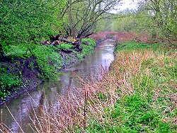Tang Hall Beck in the rain