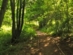 Sunshine and shade in the woods