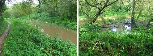 The flooded becks: Osbaldwick Beck (left) and Tang Hall Beck (right)