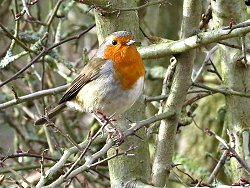 A very confiding Robin near the Dragon Stones. It allowed us to approach to within three feet!