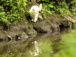 A hunting cat by Osbaldwick Beck