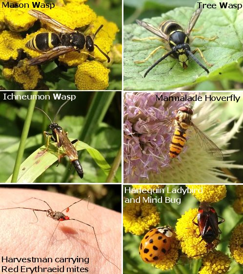 SOME OF TODAY'S INSECTS