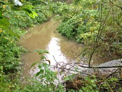 High water levels in Tang Hall Beck on 23rd October