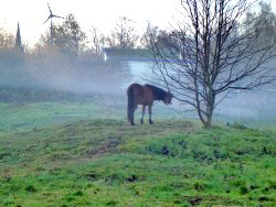 "One of our ""guests"": Grazing horse in mist, with the Environment Centre in the background"