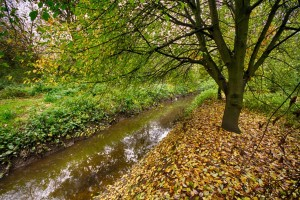 Tang Hall beck in autumn, by L Outing