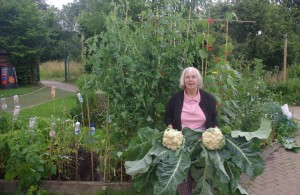 Jean with cauliflowers grown in her square foot garden