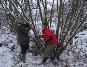Winter coppicing