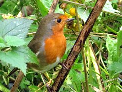 Robins have been posing throughout the month!