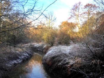 A frosty Tang Hall Beck on the last day of the year