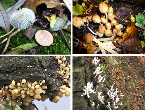 Bottom right: Candlesnuff fungus. The others not identified