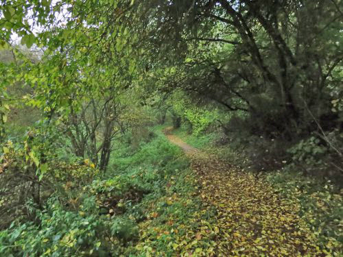 Osbaldwick Beck path - early November