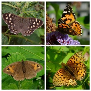 Speckled wood, painted lady, Dark green fritillary, Meadow brown