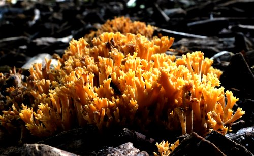 Unidentified fungus - can you help us to ID this?