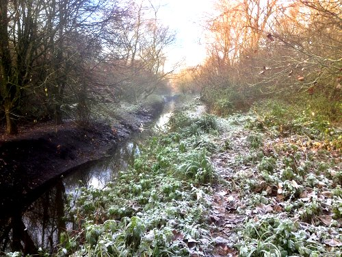 Tang Hall Beck on a frosty morning