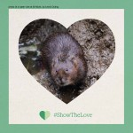 #showthelove - water vole pic by Lewis Outing