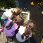 Summer 2016 pond dipping