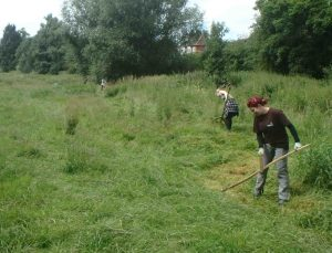 Scything at Heworth Holme in July 2017