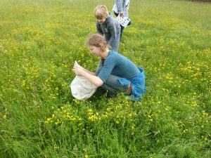 Identifying pollinators in the meadow