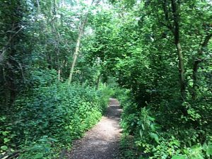 Woodland path near Tang Hall Beck