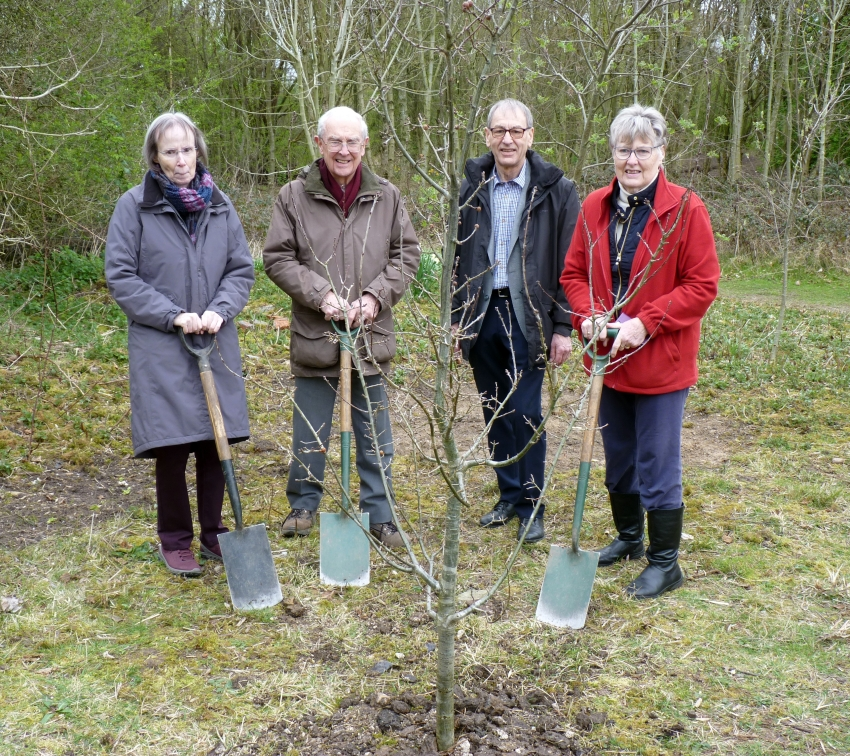 Oak Tree Planting with the Birch family