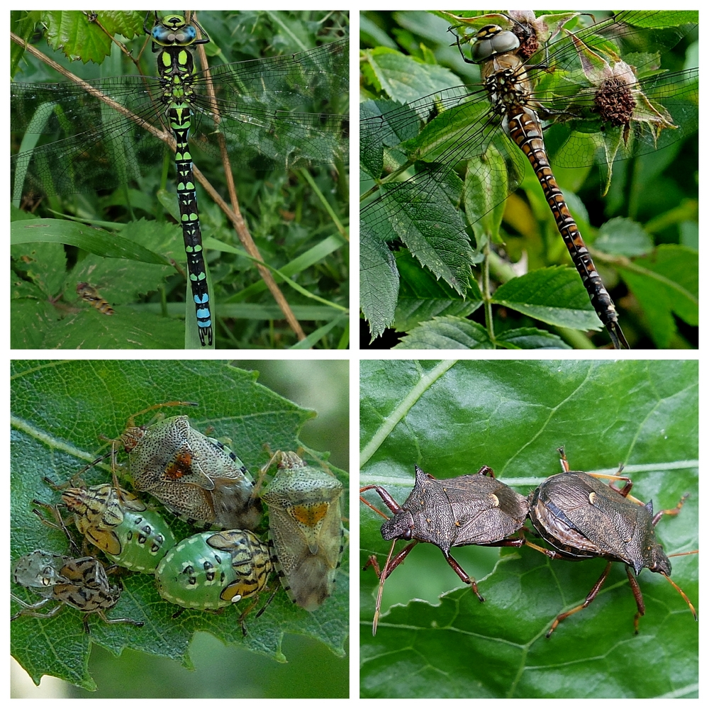 Dragonflies and Bugs