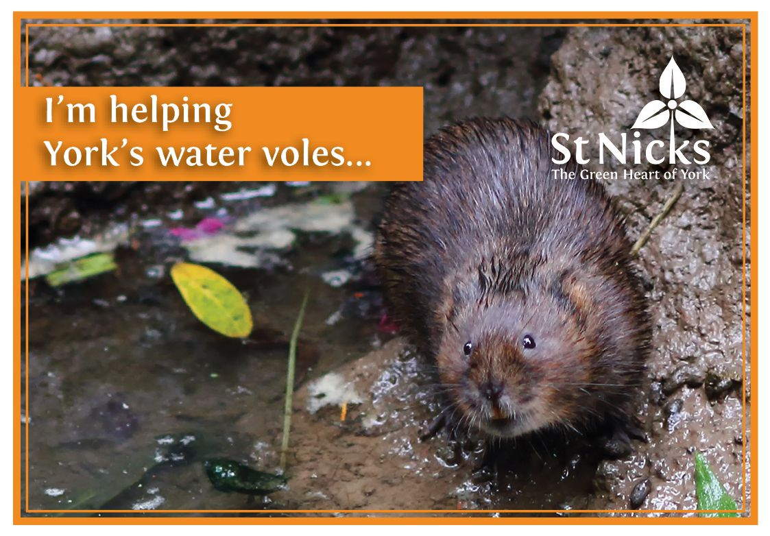 Charity gift card: water vole, by Lewis Outing