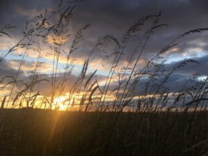 Sunset and fields of grass at Bempton Cliffs RSPB nature reserve