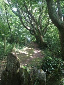 Trees and path from a woodland walk