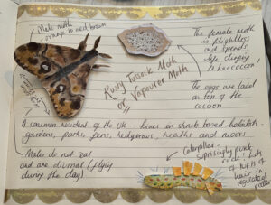 Making moths with recycled card by Ecotherapy tutor Emma McKenzie
