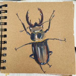 Stag beetle sketch by Ecotherapy tutor Emma McKenzie