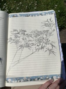 Sketching shadows by Ecotherapy tutor Emma McKenzie