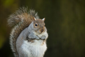 'Squirrel' photograph taken by Phil Taylor