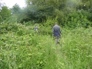 Bearing Fruit participants clearing paths at St Nicks nature reserve