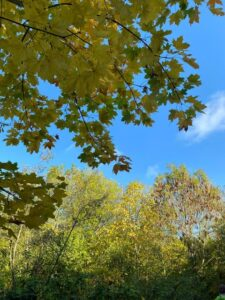 Blue sky and trees at St Nicks nature reserve