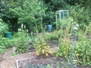 St Nicks allotment