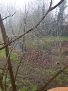 Cobwebs - Don't clear away all the cobwebs – take time to notice their beauty too!