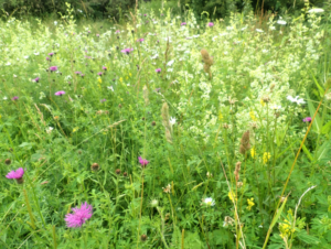 meadow flowers and grasses